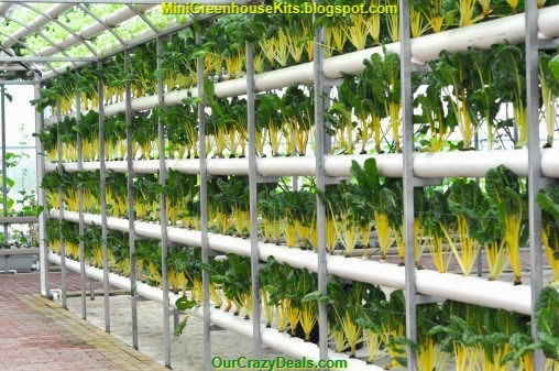 Modern Agriculture of Vegetable Green House Indoor Picture