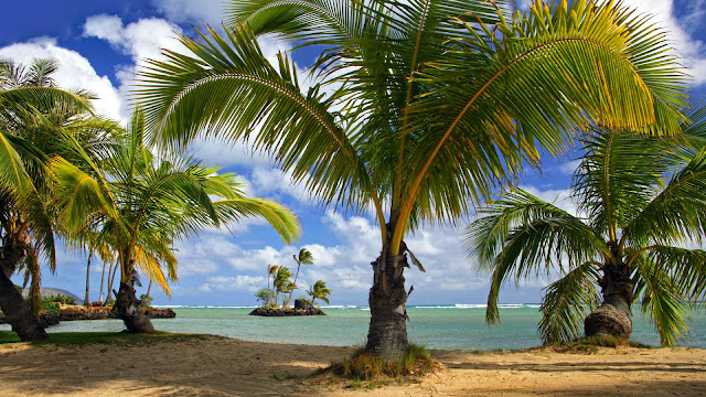 Coconut trees at beach nature wallpaper