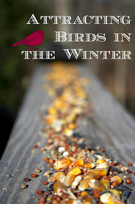attracting birds in the winter