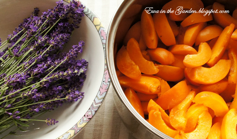 Ewa in the Garden: Apricot Lavender Jam - review, licking fingers...