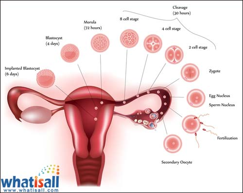 Menstrual Chart | Menstruation Charts | Menstrual Cycle Chart ...