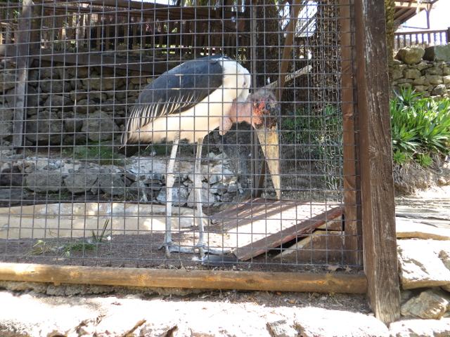 marabu palmitos park gran canaria
