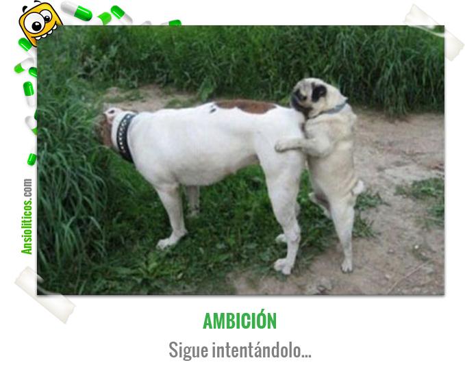 Chiste de Animales con Ambición Sexual