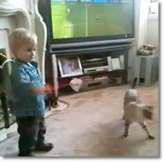 O Ataque do Gato Ninja
