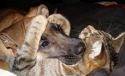 gatos+y+perros+abrazandose Imagenes de animales Divertidos