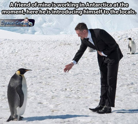 funny people penguin picture
