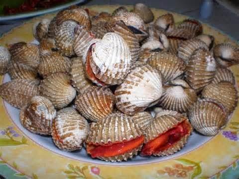 AWAS semua kerang di perairan Kuantan TIDAK BOLEH di makan