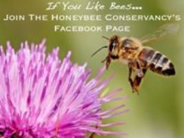 Honeybee Conservancy Facebook Page