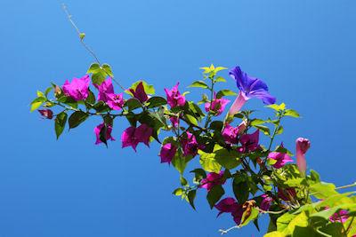 Flores distintas compartiendo el mismo espacio - Flowers