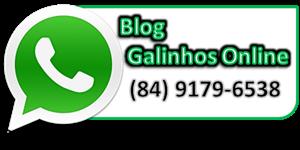 WHATSAPP GALINHOS ONLINE