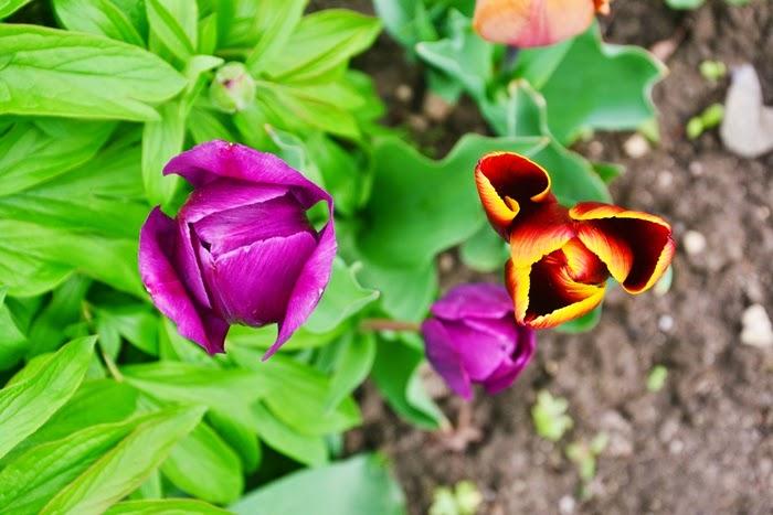 zdjęcie foto kwiaty wiosna pasja