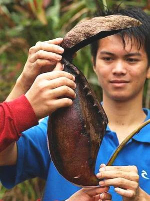 Whopper: Herman with the giant 'Nepenthes rajah' pitcher which has a volume of about 1.75 litres of water and measures 41 cm long.