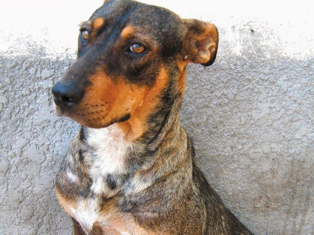Mi perra ha matado al cachorro de mi otra perra serio