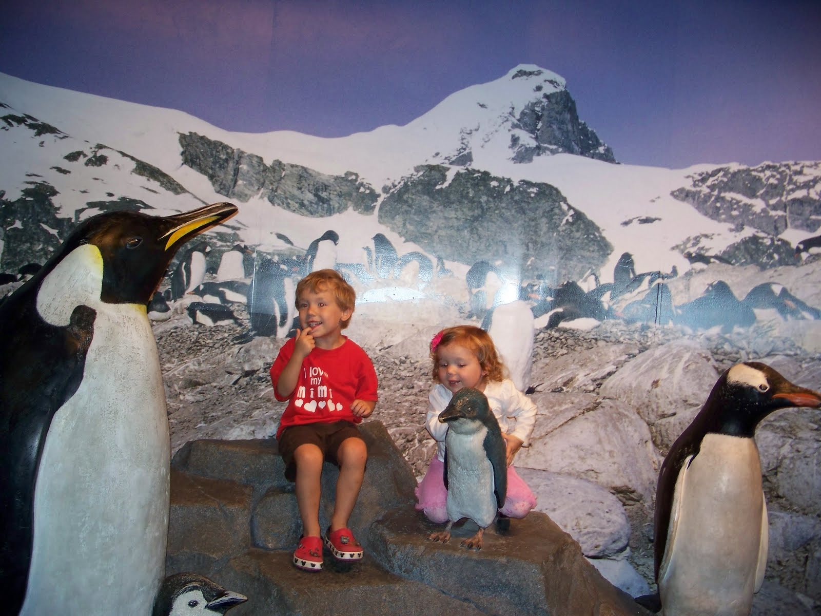 Chattanooga Zoo And Aquarium Packages