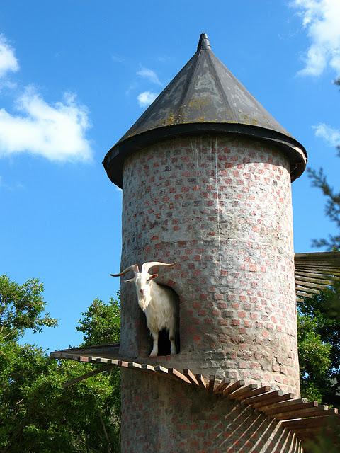 Menara Kambing, Fairview Wine and Cheese Farm, Afrika Selatan