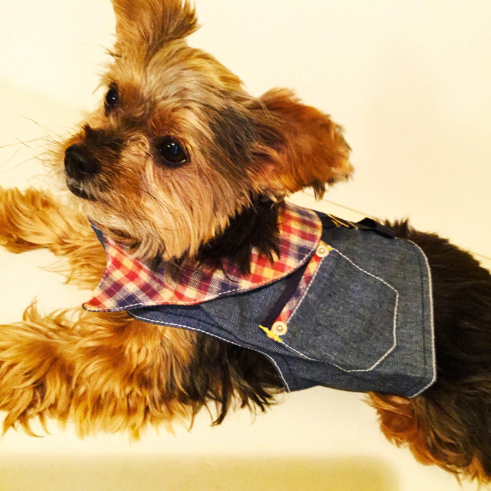 fashionable dog's harness shirts