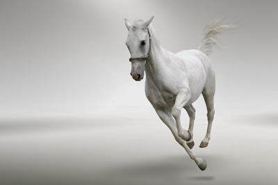 kuda putih berlari