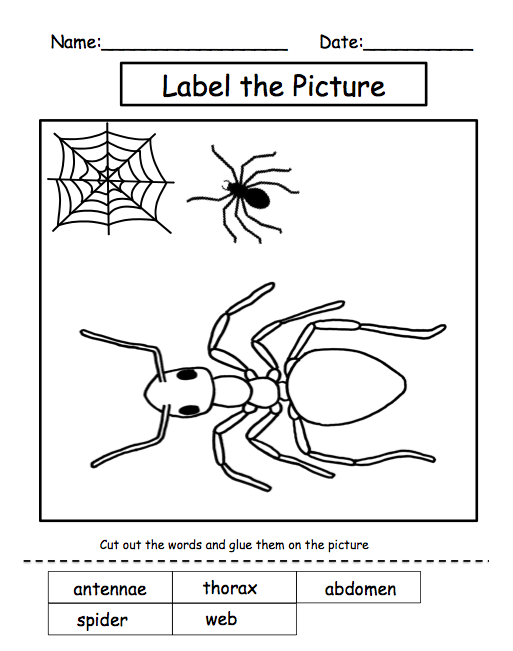 Insect Worksheets For First Grade - Pichaglobal