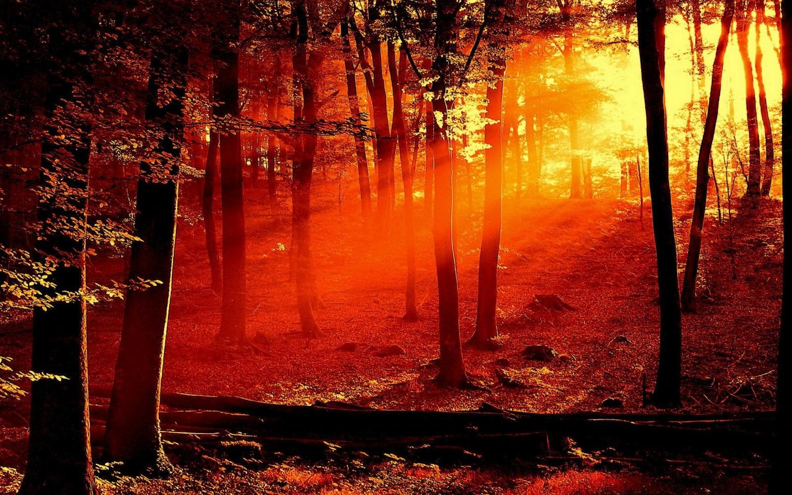 http://4.bp.blogspot.com/-1Smed1C5Lf0/T85MaCZdA-I/AAAAAAAAHN0/YdqhM7A9ctg/s1600/hd-widescreen-wallpapers.jpg
