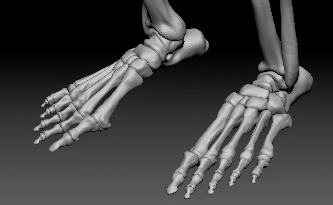 Ss Personal 3d And 2d Art Skeleton For Anatomy Reference Or