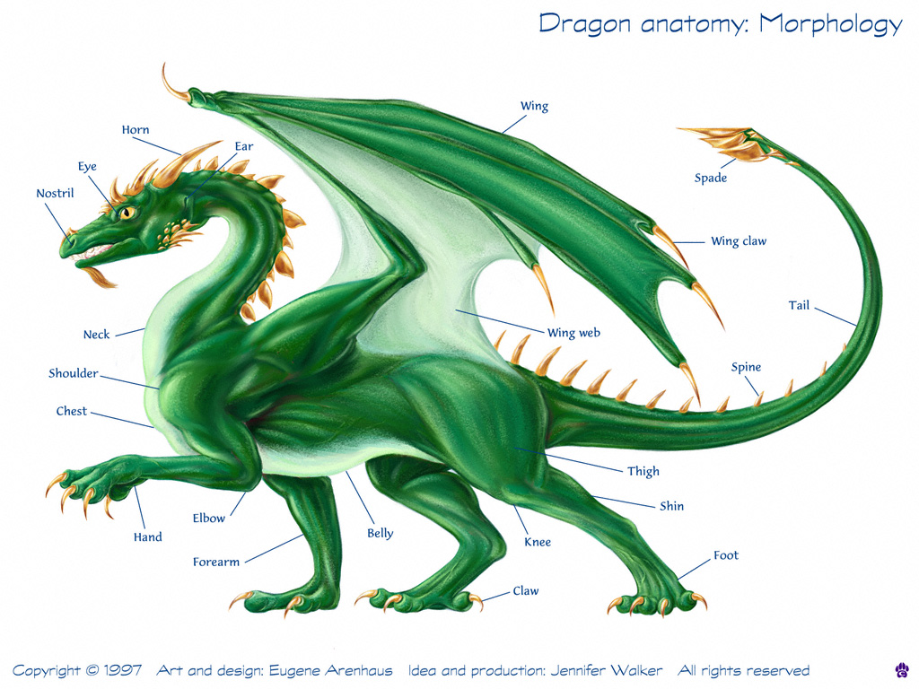 http://4.bp.blogspot.com/-1TKjgStW_OA/T-lBs0on6jI/AAAAAAAAAbc/g-vujvM6E-k/s1600/dragon+anathomy.jpg