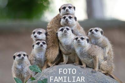 Foto familiar - Ni estamos todos los que somos, ni somos todos los que estamos.