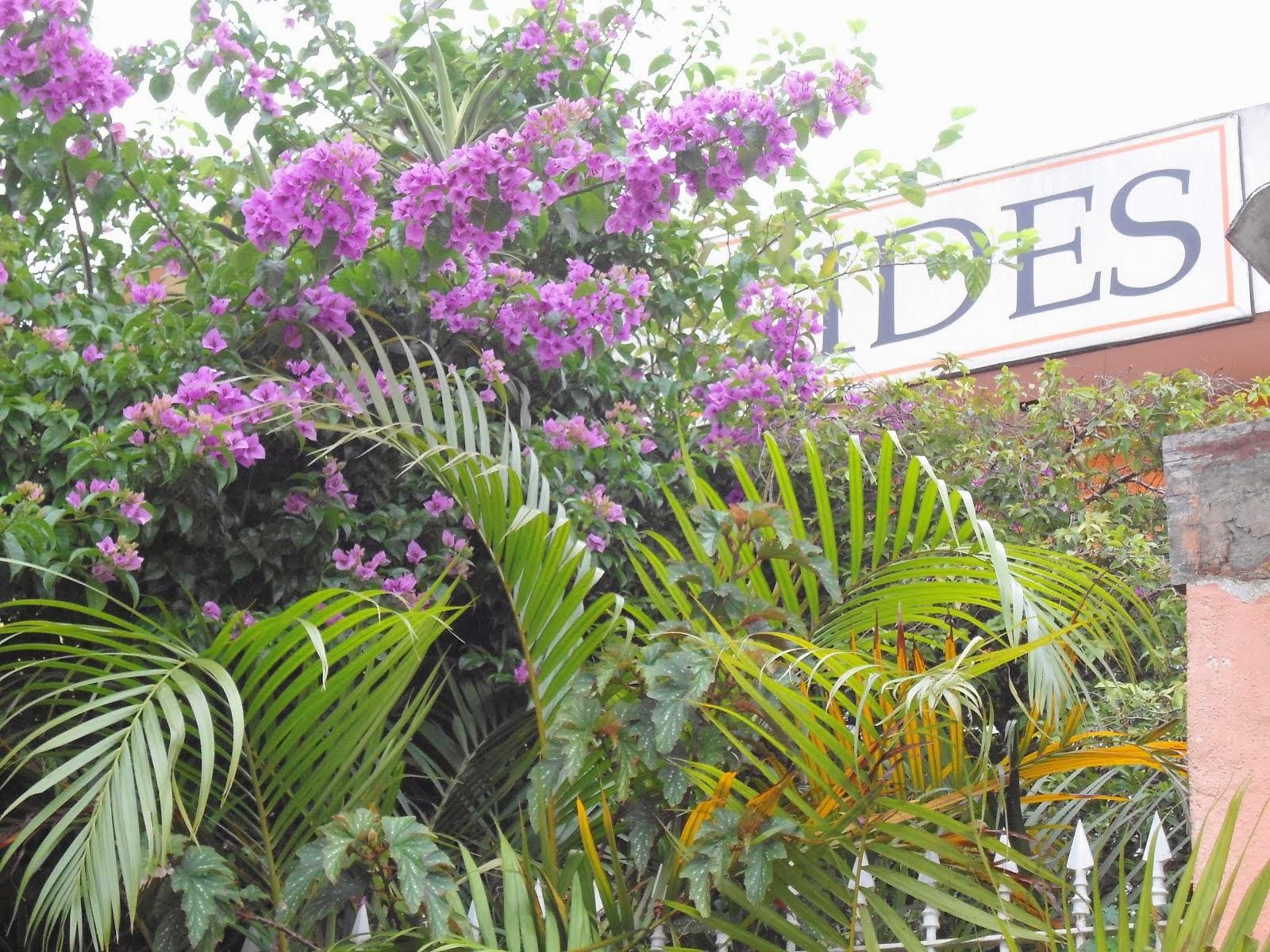 FIDES Centro Cultura Lazer e Saúde