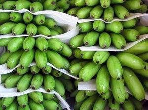 jual pisang mas kirana asal lumajang