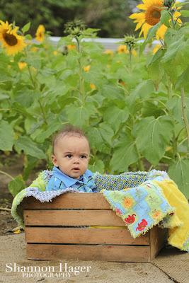 okinawa baby photographer, shannon hager photography, sunflower fields