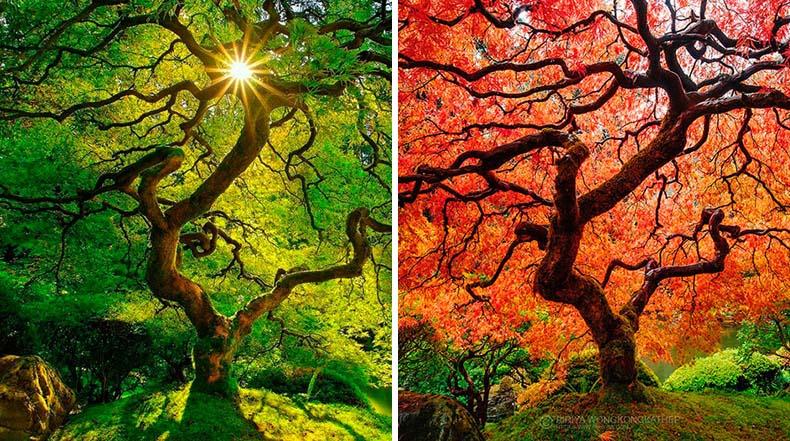 12 Fotos de un antes y un después mostrando las transformaciones del otoño