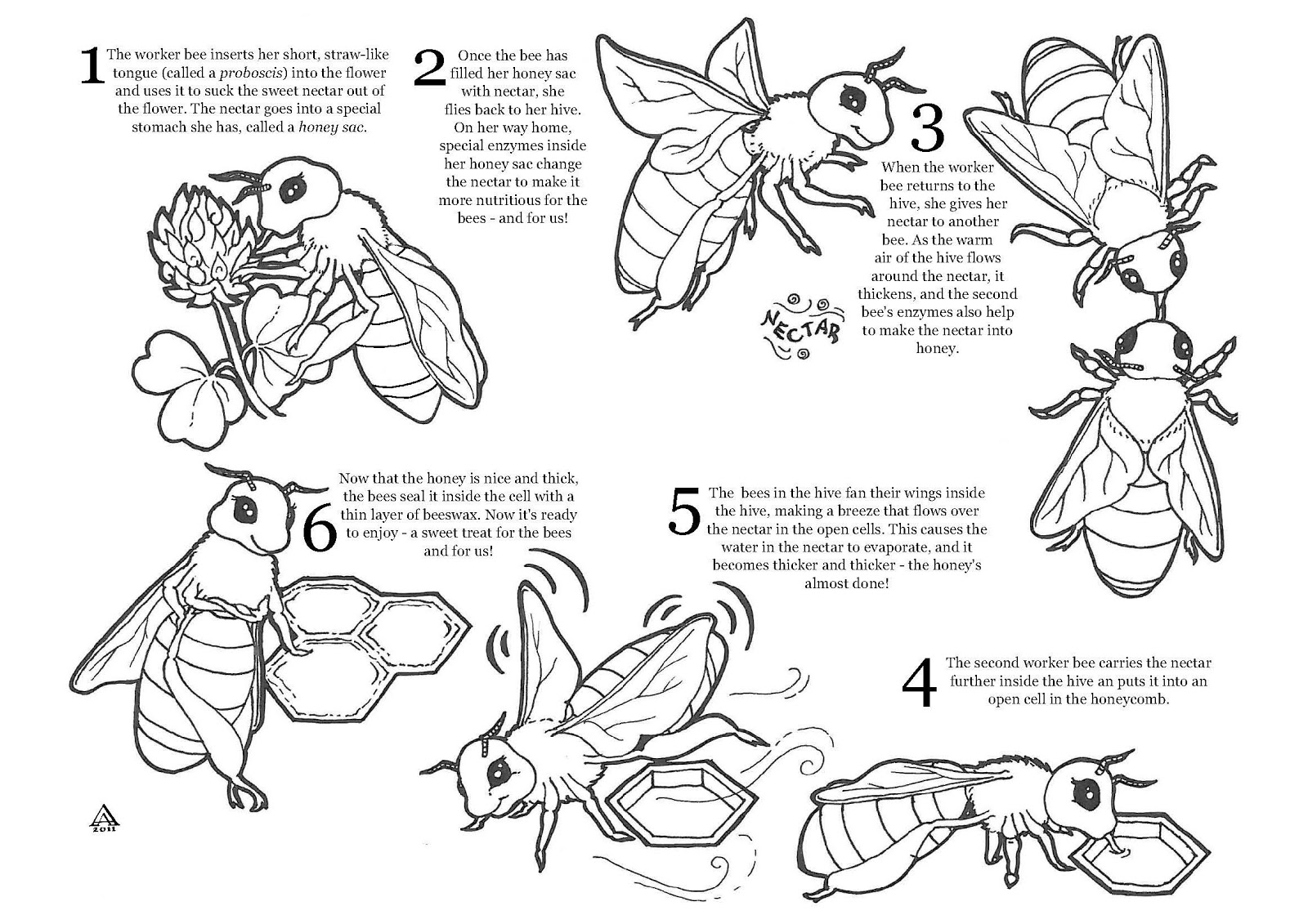 It's just an image of Peaceful Honey Bee Printables
