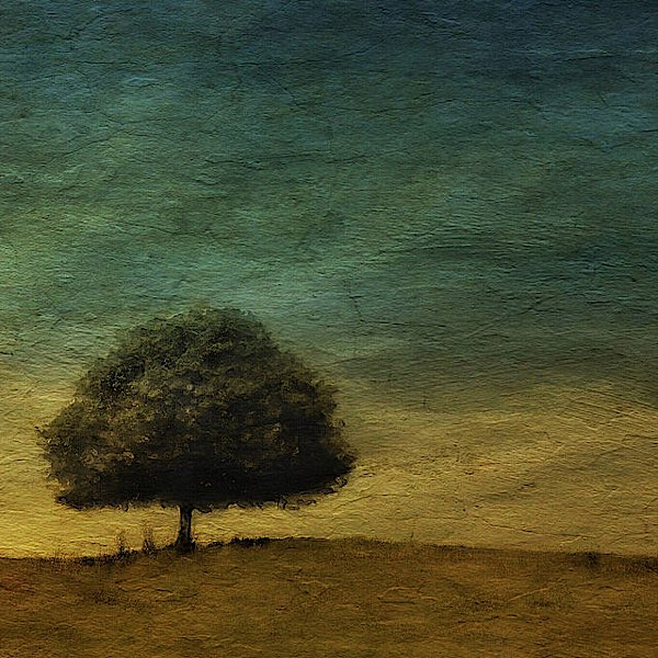 The Tree © Julie Hollow