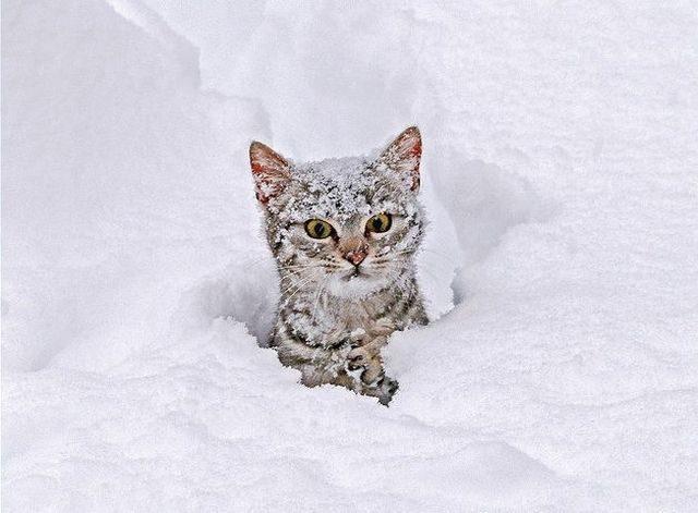 Коты в снегу, фото 1