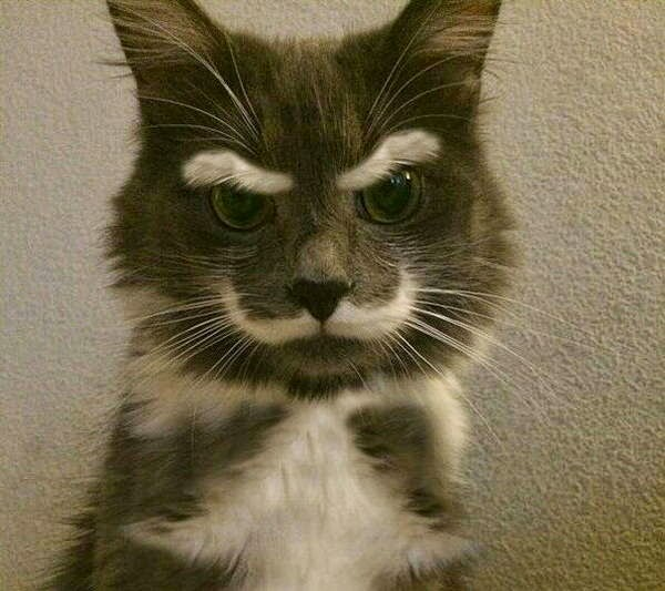 Funny cats - part 105 (40 pics + 10 gifs), cat pictures, cute cats, pictures of cats