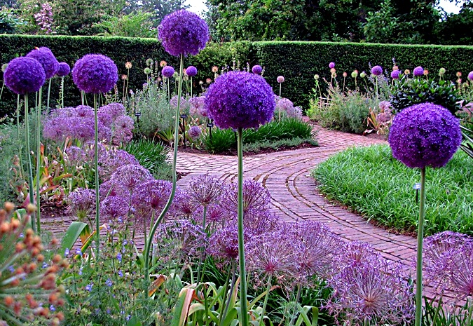 Tuscan Gardens, In Love With Aliums X