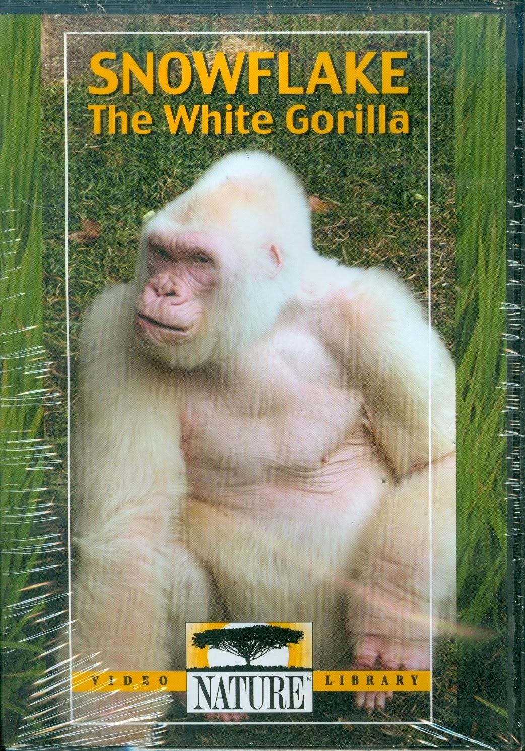 Uncategorized Snowflake The White Gorilla snowflake the white gorilla images best chimpanzee and 2016 rotten tomatoes