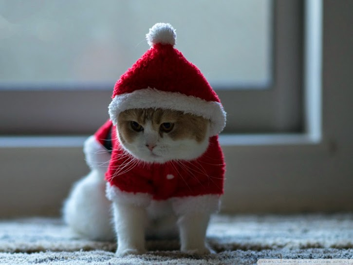 http://wallpaperswide.com/santa_claus_cat-wallpapers.html