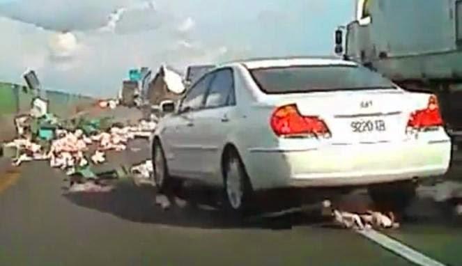 Ratusan ayam berhamburan di jalan tol