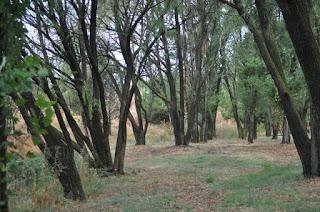 leganes-mi-ciudad-arroyo-butarque-1
