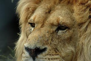 ملف كامل عن اجمل واروع الصور للحيوانات  المفترسة   حيوانات الغابة  327960789_32707f6c56