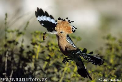 Conheces este animal?