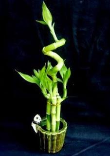 Favores de Boda, Plantas Ornamentales