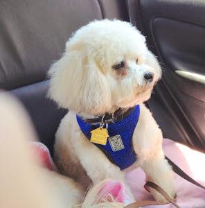 Skippy (Now Clancy) loves rides