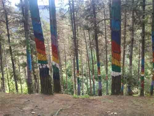 Bosde de Oma, Urdaibai