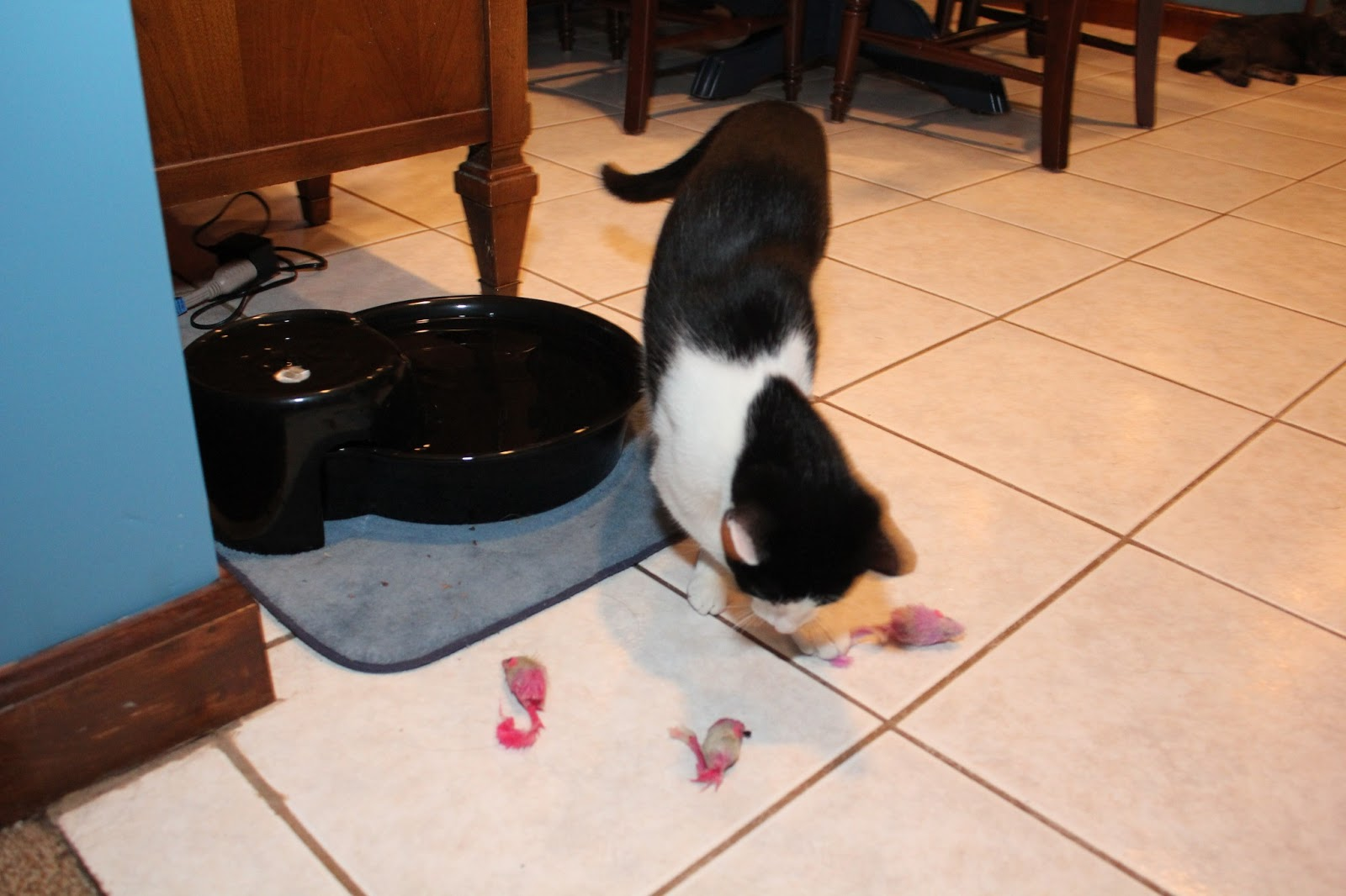 Cat plays with 3 wet toy mice