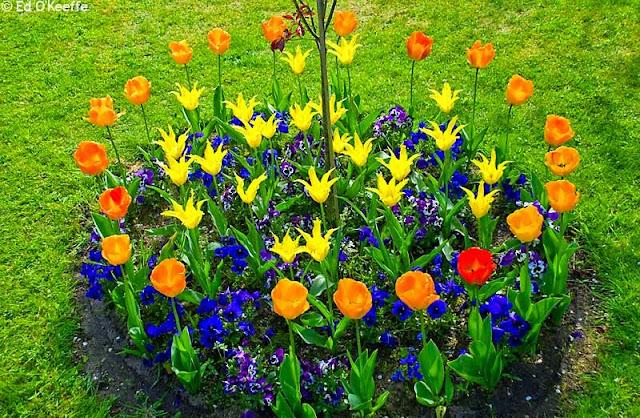 jardin-flores-coloridas