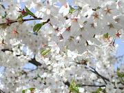 Essências da Vida. O Perfume e as flores. são essências da vida