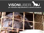 FIRMA LA PETIZIONE ON LINE PER L'ABOLIZIONE DEGLI ALLEVAMENTI DI ANIMALI DA PELLICCIA