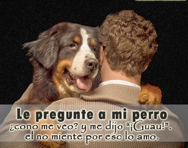 FRASES CHISTOSAS CON IMAGENES