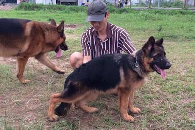 Để sở hữu một con chó giống có giấy tờ nguồn gốc xuất xứ, người chơi phải bỏ ra không ít tiền.